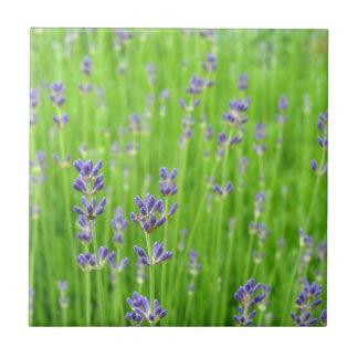 Feld des Lavendels Kleine Quadratische Fliese
