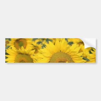 Feld des Sonnenblume-Autoaufklebers Autoaufkleber