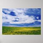 Feld von Canola oder Senf-Blumen, Palouse Poster