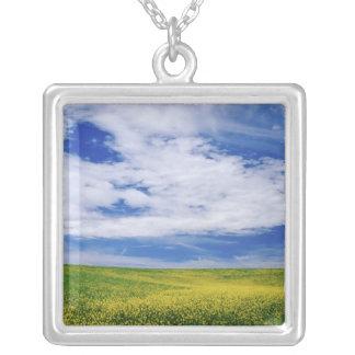 Feld von Canola oder Senf-Blumen, Palouse Versilberte Kette