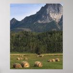 Felder mit freigekauftem Heu, Alberta, Kanada Poster