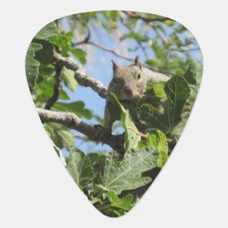 Felsen-Eichhörnchen Plektron