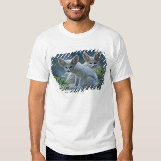 Fennek (Vulpes zerda) W�_stenfuchs, Fennec Shirts