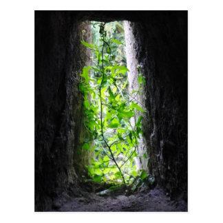 Fenster-Pflanze Postkarte