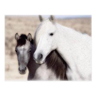 Fertigen Sie PferdeParty Einladungen und -karten b Postkarten