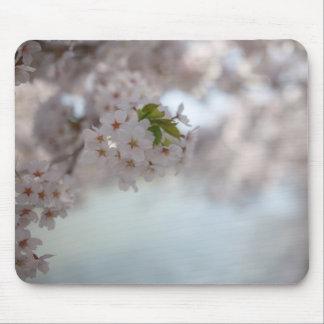 Festival Aomori Kirschblüte Mousepad