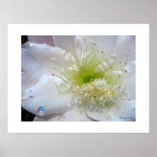 Festlicher weißer Kaktus-Blumen-Plakat-Druck Poster
