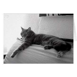 Fette Tabby-Katze Karte