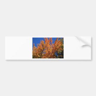 Feuer-Orangenbaum Autoaufkleber