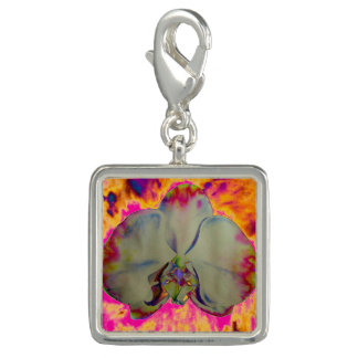 Feuer-Orchidee - Rosa Charms
