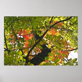 Feuer über dem grünen Herbst-Blätter Poster