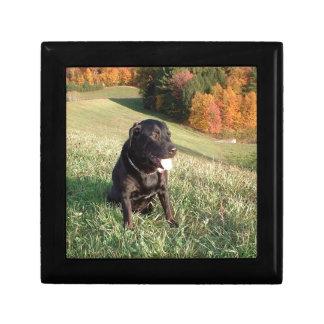Feuerstein-Hund Geschenkbox