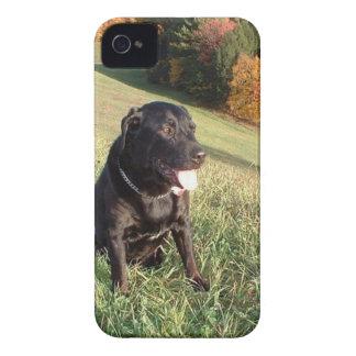 Feuerstein-Hund iPhone 4 Case-Mate Hüllen