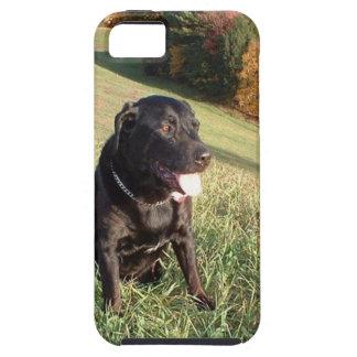 Feuerstein-Hund iPhone 5 Cover