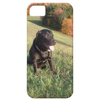 Feuerstein-Hund iPhone 5 Etuis