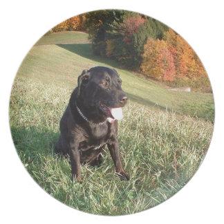 Feuerstein-Hund Melaminteller