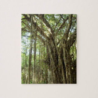 Ficus-Baum, Hawaii Puzzle