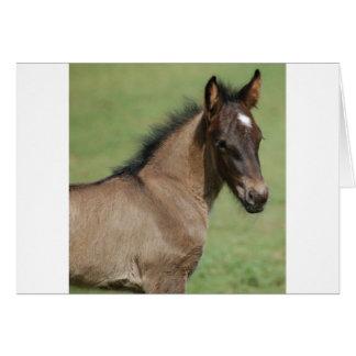 Fiel Pony-Fohlen-Saphir Karte