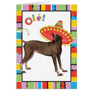 Fiesta Xolo Karte