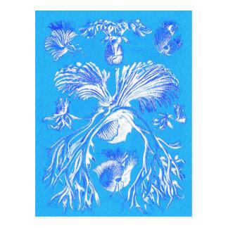 Filicinae auf blauem Hintergrund Postkarte