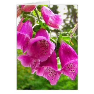 Fingerhut-Blüten Karte