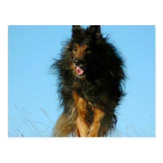 Finnische Lapphund Hundepostkarten Postkarte