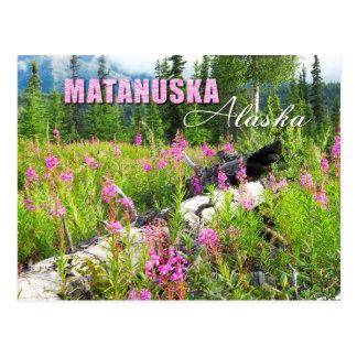 Fireweed-Blumen in Matanuska Tal, Alaska Postkarte
