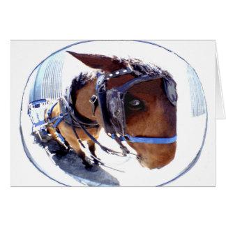 Fisch-Auge Pferd und Wagen Karte