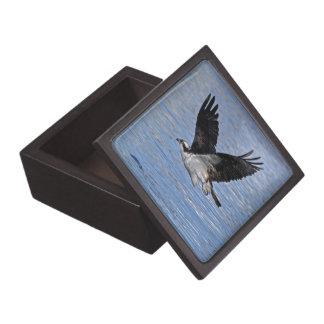Fisch-Eagleosprey-Natur-Fotografie Schachtel