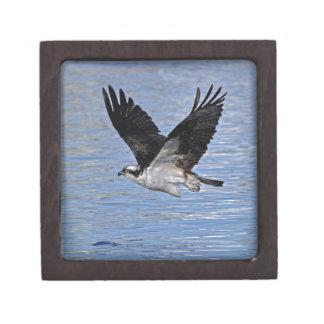 Fisch-Eagleosprey-Natur-Fotografie Schmuckkiste