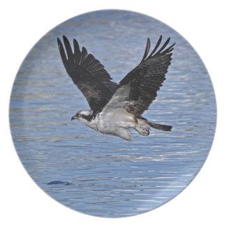 Fisch-Eagleosprey-Natur-Fotografie Teller