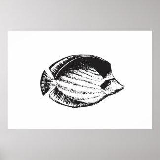 Fische 2 der Fisch-Sammlungs-| Poster