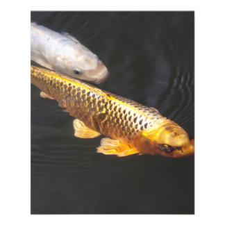Fische Asiens Koi 11,4 X 14,2 Cm Flyer