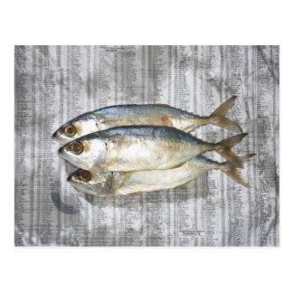 Fische auf Finanzzeitung, erhöhte Ansicht Postkarte