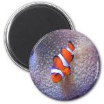 Fische, Clownfische Kühlschrankmagnet
