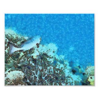 Fische, die über das Riff sich bewegen Fotodruck