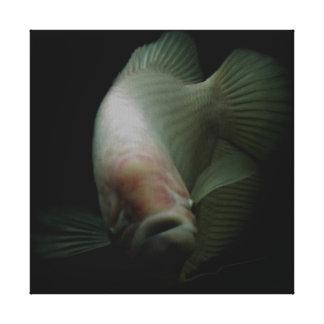 Fische im Behälter-Porträt Leinwanddruck