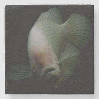 Fische im Behälter-Porträt Steinuntersetzer