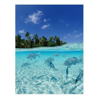 Fische im Meer Postkarte