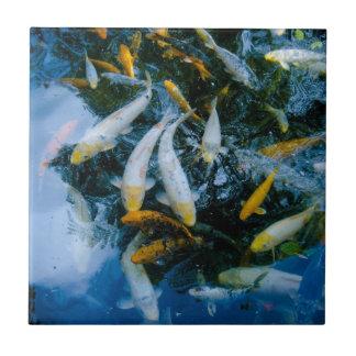 Bunte fische fliesen for Fische im teich