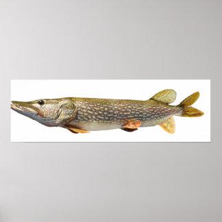 Fischen Pikes Muski Poster