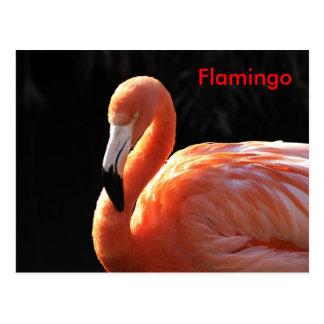 Flamingo Postkarte