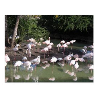 Flamingo See Postkarten
