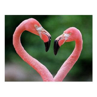 Flamingopostkarte Postkarte