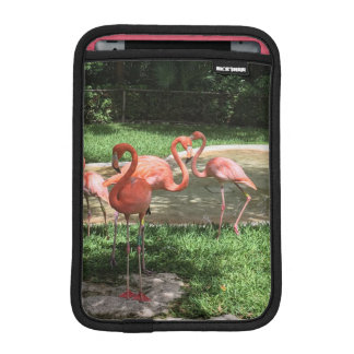 Flamingos auf dem Riviera-Maya in Mexiko iPad Mini Sleeve