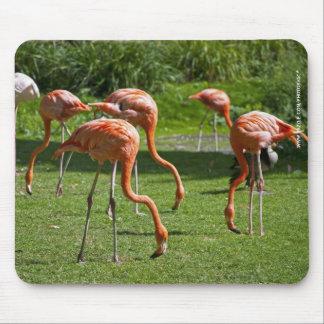 Flamingos Mousepad