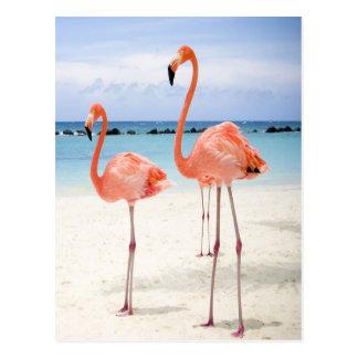 FlamingoStroll Postkarte