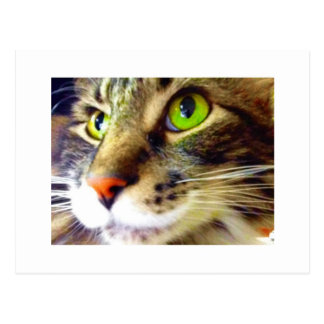 """""""Flaumig sagt hallo"""" niedliche Katzen-Postkarte Postkarte"""