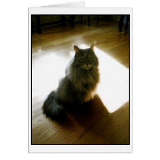 Flaumige Katze in der Sonnenscheingrußkarte Karte
