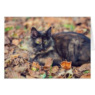 Flaumige Schildpatt-Miezekatze im Herbst Karte